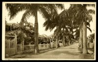 Lot 436:Bahamas: Raphael House sepia PPC of 'VICTORIA AVENUE'.