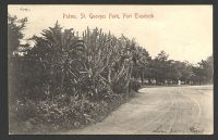 Lot 4447 [2 of 2]:1906 use of KEVII 1d on P.S.&C. PPC of 'Palms, St. Georges Park, Port Elizabeth', cancelled with double-circle 'CAROLINA/9SEP06 1230PM' (A1).