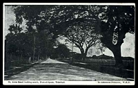 Lot 96:Trinidad: W.H.Y. PPC of 'St. Anns Road looking south, Port-of-Spain, Trinidad, B.W.I.', unused.