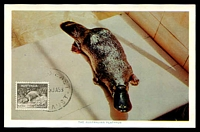 Lot 4815:1956 9d Platypus on coloured PPC of Platypus, cancelled with light cds of Jan 58.