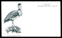 Lot 50:Australia - Birds: black & white PPC All About Australians series with 'Australian Plain Turkey', minor edge bump, early card.