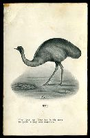 Lot 51:Australia - Birds: black & white PPC 'Emu'.