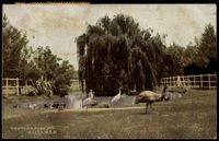 Lot 7106:Wagga Wagga: - multi-coloured PPC 'Newtown Park, Wagga, NSW' fine scene with Brolgas, Emu etc.  PO 1/1/1849.