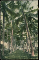 Lot 1672 [1 of 2]:Mackay: - Multicoloured PPC 'Coconut Palm Grove, Mackay, Q'.  PO 1/8/1863.