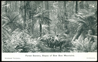 Lot 42:Australia - American Fleet: Black & white PPC 'Victoria Welcomes the American Fleet' with scene 'Forest Scenery, Slopes of Baw Baw Mountains' issued by Victorian Government, fine Fleet card.