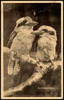 Lot 37:Australia: Black & white PPC 'Kookaburras'.