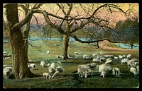 Lot 2318 [2 of 2]:458: '458' on 1d pink tied by unframed 'BEALIBA/FE6/07/VICTORIA' (A1) on multicoloured PPC Popular Series card of sheep grazing, minor corner faults.  Allocated to Bealiba-Renamed from Cochrane's PO 1/1/1864; LPO 3/12/1993.