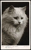 Lot 2275 [2 of 2]:1877: on 1d pink tied by unframed 'ELSTERNW[ICK RE]CG HOUSE/D/SE9/07/VIC' (B2-) on black & white real photo PPC of 'Her Majesty (cat)' Rotary Photo, creased. [Rated SS]  Allocated to Elsternwick Receiving House-RH c.1891; renamed Elsternwick West PO c.1908.